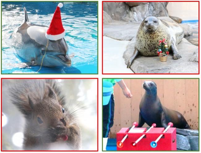 仙台うみの杜水族館「UMINOMORI WINTER クリスマス」