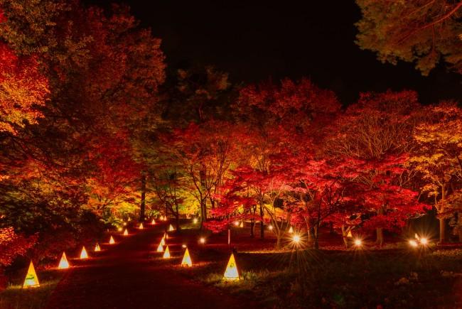 紅葉をライトアップ、埼玉・武蔵丘陵森林公園で「紅葉見ナイト」